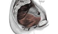 Pezoderm - az időskori inkontinenciáról